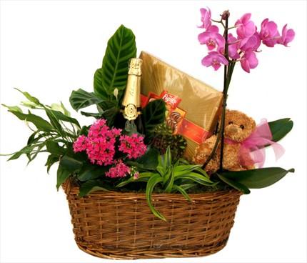 Bitki aranjmandan hediye sepeti