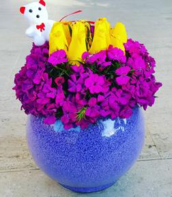 Hüsnü yusuf tutkusu / ürünler: 1 adet şeffaf, cam fanus, lila kum, 11 adet sarı güller ve muhtelif fuşya hüsnü yusuflar