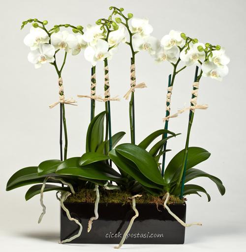 6 dal orkidelerden hazırlanmış bitki aranjman ortalama boy ( 70-90 cm)