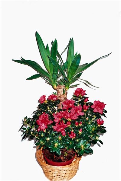 Çiçekli bitki aranjmanı