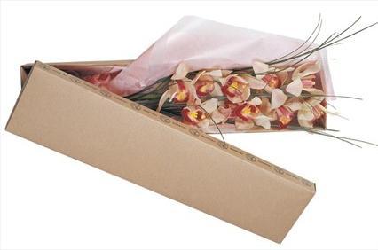 Kutu içerisine hazırlanmış 2 dal orkide