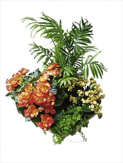 Çiçekli ve yeşil bitki aranjmanı