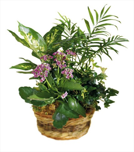 Sepet içerisinde bitki aranjman