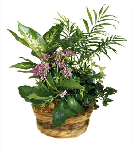 Bitki aranjmanı