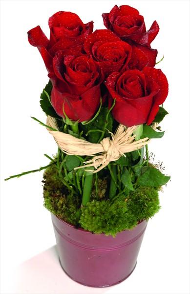 5 adet kırmızı güllerden hazırlanmış aranjman
