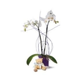 2 dallı beyaz bitki orkide