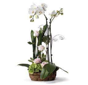 Orkide ve güllerle hazırlanmış özel tasarım