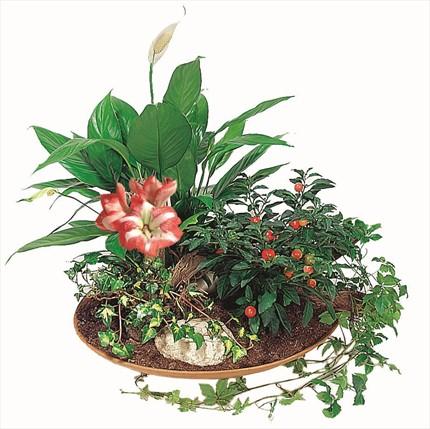 Sepet içinde doğal çiçekler - olağanüstü bir armağan