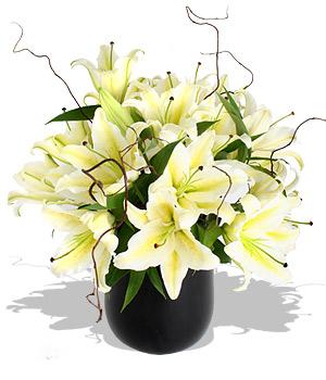 Lilyumlardan hazırlanmış özel tasarım arajman / Ürünler siyah vazo  6 dal beyaz lilyum