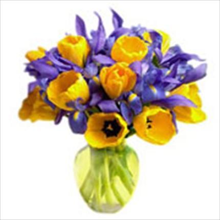 Mavi irislerden, mevsime göre sarı lale veya gerberalardan hoş bir taze mevsim aranjmanı