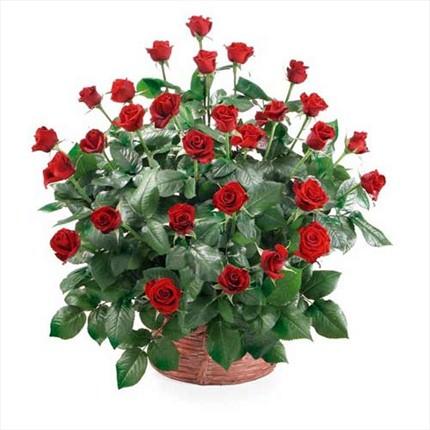30 adet kırmızı güllerden hazırlanmış sepet aranjman