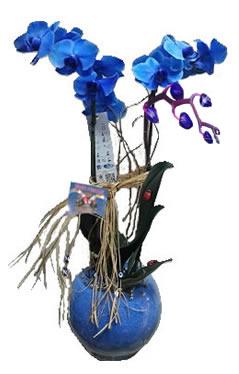 cam fanusda  2 dallı mavi orkideler kalıcı saksı çiçeği (70-90 cm)
