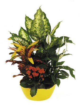 Çiçekli bitkilerden hazırlanmış kalıcı bitki arajmanı