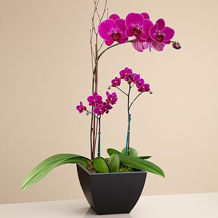 Özel seramik vazoda 3 dallı pembe orkideler (60-90 cm)