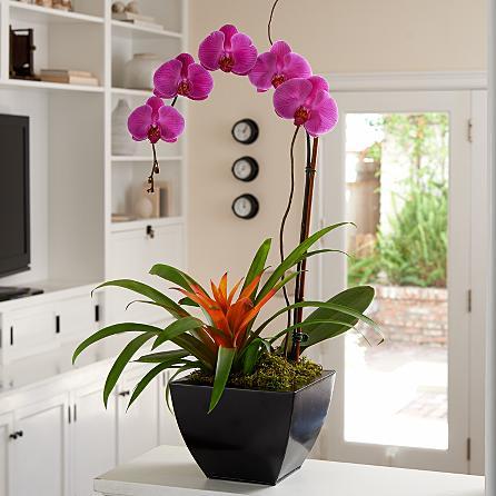 Özel seramik vazoda tek dallı pembe orkide ve guzmania ile hazırlanmış özel tasarım (60-90 cm)