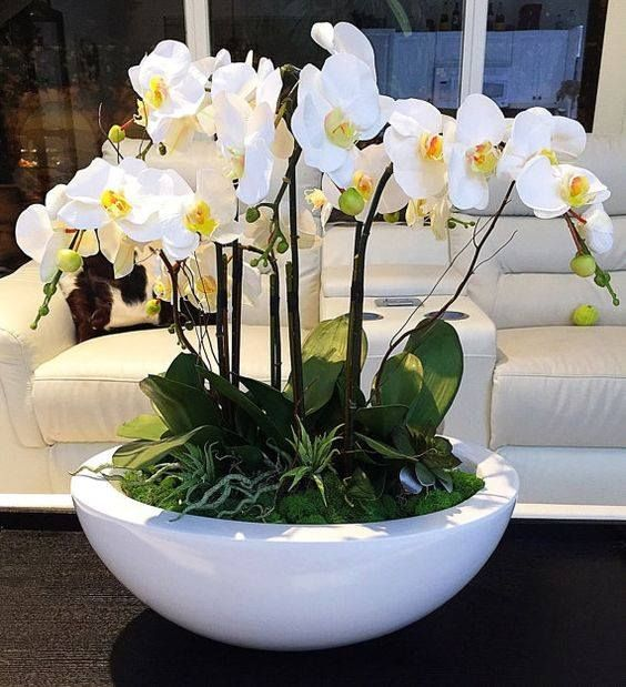 Mini beyaz orkideler / 6 dal özel ithal orkideler ile dekore edilmiş bitki aranjman ortalama boy 30-40 cm kalıcı saksı çiçeği