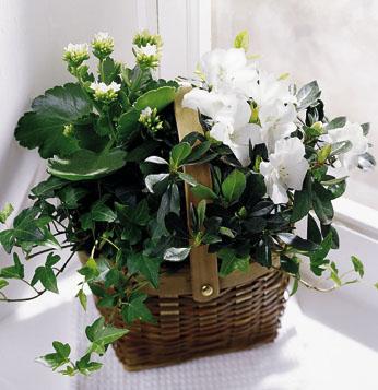Sepette bitki aranjman