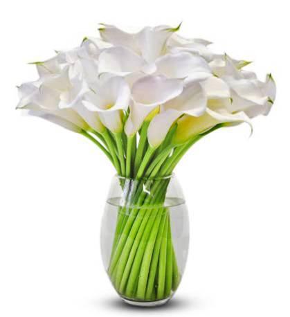 Beyaz Galalar mahsumiyetin rengi / cam vazo içerisinde 19 adet beyaz gala ile hazırlanmış aranjman