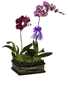Sepet içerisine tanzim edilmiş bitki orkide