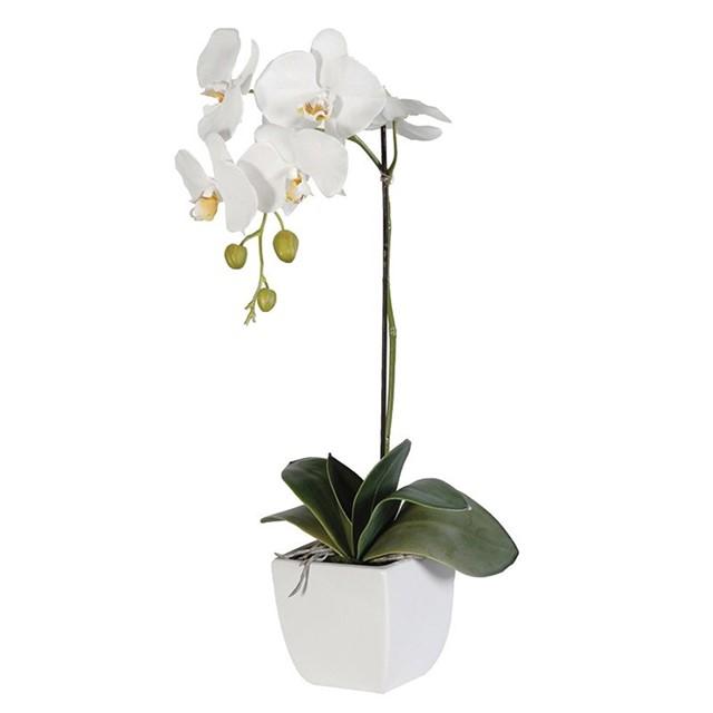 Tek dal beyaz orkide / Beyaz seramik vazoda hazırlanmış tek dal beyaz orkide ortalama boy (70-90 cm)