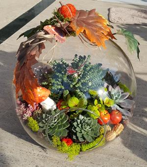 Çöl tutkusu teraryum / Ürünler 5 adet suculent aksesuarlar doğal taşlar ithal yosunlar ile hazırlanmış özel butik tasarım terrarium