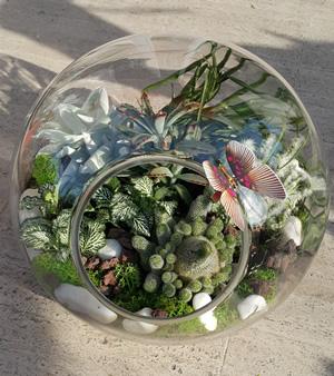 Yeşil tutku teraryum /ürün : Cam dünyasında özenle hazırlanmış teraryum 2 adet kaktüz 3 adet sukkulent 1 adet tillandsia ithal yeşil yosun doğal tağlar
