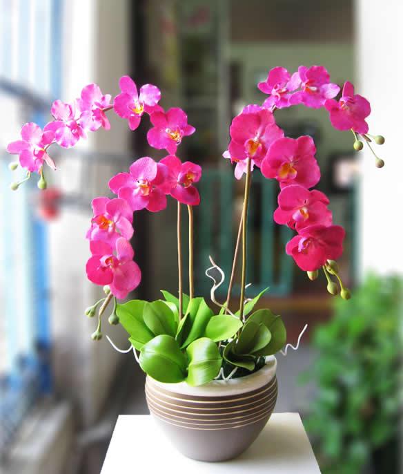 Özel küp saksıda 4 dallı pembe orkideler (70-90 cm)
