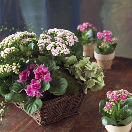Bitki aranjman