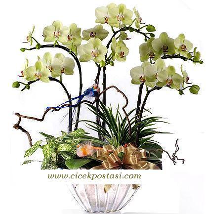 6 dal orkidelerden hazırlanmış bitki aranjman (70-90 cm)