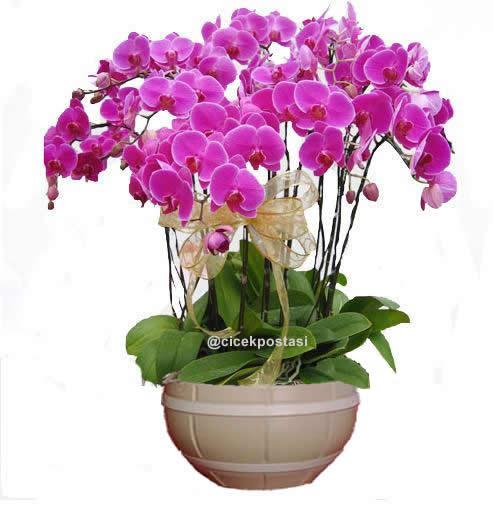 12 dal pembe orkidelerden hazırlanmış bitki aranjman (70-90 cm)