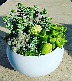 Çöl yeşili teraryum /ürünler 4 adet sukkulent ithal yosunlar beyaz cam ile hazırlanmış özel butik tasarım teraryum