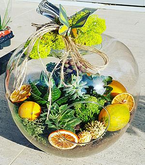 Amazon renkleri teraryum / Elma modeli cam teraryum 5 adet sukkulent Aksesuarlar ve ithal yosunlar ile hazırlanmış butik tasarım