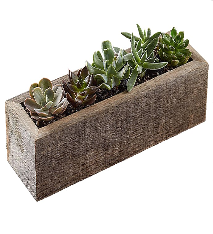 Teraryum aranjman geniş ahşap /5 adet suculent torf ve dik dörtgen ahşap ile dekore edilmiş teraryum bitki aranjman