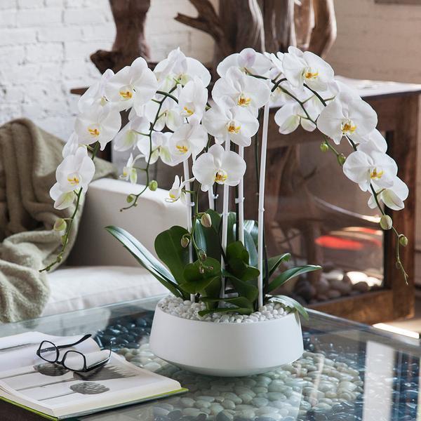 4 dal beyaz orkideler / seramik vazoda 4 dallı beyaz orkideler