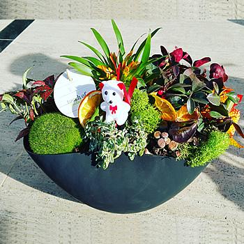 Amazon rüzgarı teraryum /ürünler 7 adet sukulent ithal yosunlar yayvan cam ile hazırlanmış özel butik tasarım teraryum