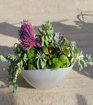 Amazon rüzgarı teraryum / ürünler 7 adet sukkulent ithal yosunlar yayvan cam ile hazırlanmış özel butik tasarım (teraryum)