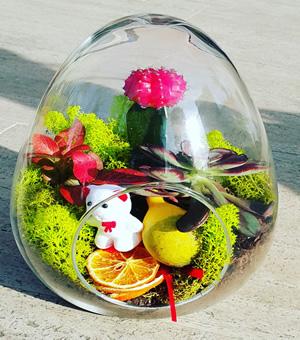 Çölün renkli yumurtası / Yumurta cam terarryum 3 adet sucullent Aksesuarlar ve ithal yosunlar ile hazırlanmış butik tasarım